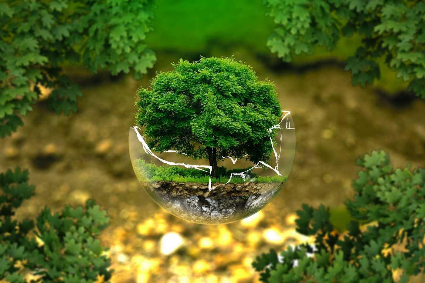 Savoie Transmissions trophée Eco-responsable 2017